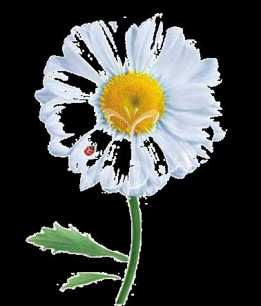 Цветочек ромашка